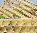 Верхний студень Chewable, богачи 10 SGS 100% EU естественный королевский окси - Decanoic укусная кислота только имеет чисто естественное портивораковый королевского студня исключительное в мире природы