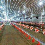 Strumentazione di allevamento di pollame con il sistema di ventilazione