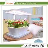 Keisue 테이블 꽃과 식물성 마이크로 농장