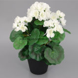 Vendas quente Pennywort Artificial Flower