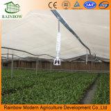 Aço Galvanizado de Venda Quente Po Film Agricultura Estufa para Comercial