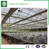Agriculture/serre chaude en verre Multi-Envergure de jardin pour le fruit/fleur