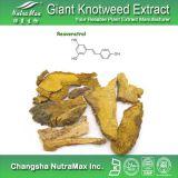 100% натуральные гигантские Knotweed Rhizome извлечения (99% Ресвератрол)