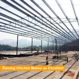 Prefabrication het huis van het de kippenlandbouwbedrijf van de staalstructuur