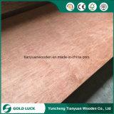 Chapas de madera (12 mm Muebles Grado) Bintangor Comercial