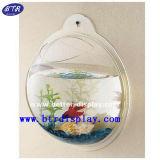 Prateleira de plexiglass transparente em tigela de peixe montada na parede