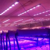 LED-Pflanze wachsen wasserdichte weiße volle Spektrum-Blüten-Pflanzenlampe
