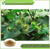 Great Burdock Achene Extract Powder