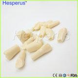 Repuesto Dental dientes modelo para sustituir los dientes práctica estudiantil con el tornillo Hesperus Nissin