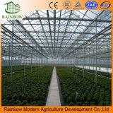 Tipo de alta resistencia invernadero de Venlo del Anti-Viento del policarbonato para cultivar