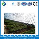Groene Huis van de Tunnel van de landbouw het Economische voor het Plantaardige Groeien