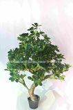 최신 판매 상록 플라스틱 Bonsai 나무