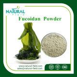 공장 공급 켈프 해초 추출 Fucoxanthin 20% Fucoidan 85%