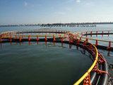 Sich hin- und herbewegender Fisch-Rahmen bilden im HDPE Material