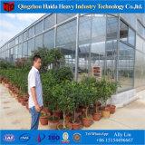 Het commerciële Grote Groene Huis van de Film van de Hydrocultuur van de Grootte voor Tomaat