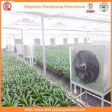 Agricultura/casas verdes del policarbonato del jardín comercial de la hoja para las flores