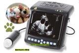 Scansione di ultrasuono della riproduzione dell'animale da allevamento per la gravidanza