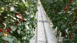 Barriera riflettente della stuoia del Weed/Weed/panno a terra/coperchio al suolo