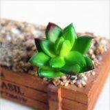 Для использования внутри помещений оформление ПВХ пластика фо фиктивных искусственных сочные растения