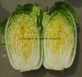 새로운 작물 신선한 채소 배추