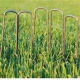 6 غلفن بوصة منظر طبيعيّ عشب حديقة مشابك