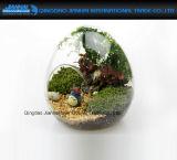 Het Ei van het Decor van de Tuin van de fee vormde de Duidelijke Vaas Terrariums van het Glas
