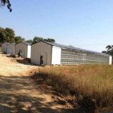 Изолированная автоматизированная ферма пакгауза цыпленка бройлера/слоя