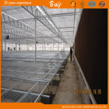 Venlo 지붕 농업 폴리탄산염 장 녹색 집