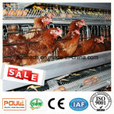 Het Voeden van de Kooi van de Kip van het Landbouwbedrijf van het gevogelte Automatisch Systeem voor Laag