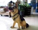 """14.5 """" cani di pastore tedesco fortunati del cane della statua realistica bella della resina si dirigono la decorazione"""