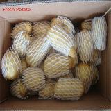 La Chine Veriety de pommes de terre fraîches Holland