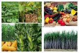 Sc di Florasulam 98% TC 50g/l del diserbante per frumento