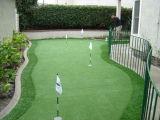 Hierba verde para el campo de golf