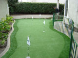 Herbe verte pour le terrain de golf