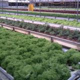 Sistema de hidroponia para emissões de produtos hortícolas