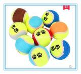 كلب كرة قاذفة