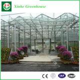 Tipo invernadero de cristal de Venlo para Growing del vehículo y de flores
