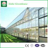 Invernadero de cristal comercial con el sistema de control del clima