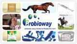 L'antibactérien folâtre le supplément équin d'alimentation des animaux d'aspergille noir de cheval