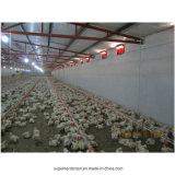 Оборудование цыплятины для продуктов бройлеров
