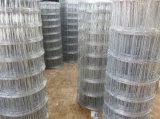 De Omheining van de weide (professionele fabrikant, beste prijs en goede kwaliteit)