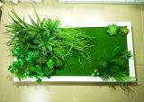 Plantes et fleurs artificielles de la centrale succulente Gu-Jy823213726