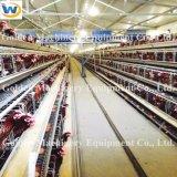 Cage automatique de poulet de couche des meilleurs prix de l'Afrique du Sud à vendre