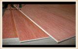 4 ' *8'18mm 9 couches contre-plaqué de peuplier et de placage de Bintangor de faisceau d'eucalyptus pour l'emballage