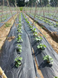 Tela tecida agricultural da esteira do controle de Weed