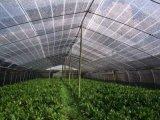 HDPE Netto de Schaduw van uitstekende kwaliteit van de Zon