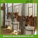 Gaiolas galvanizadas da vitela para a vaca