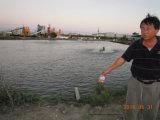 Aditivo da alimentação de Unigrow para a criação de animais da cultura aquática