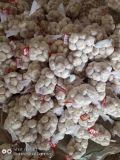 Nouvelle saison normal frais chinois White & blanc pur de l'ail