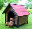 Chien de la maison en bois